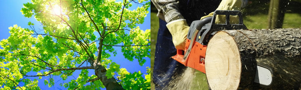 Tree Services Windermere